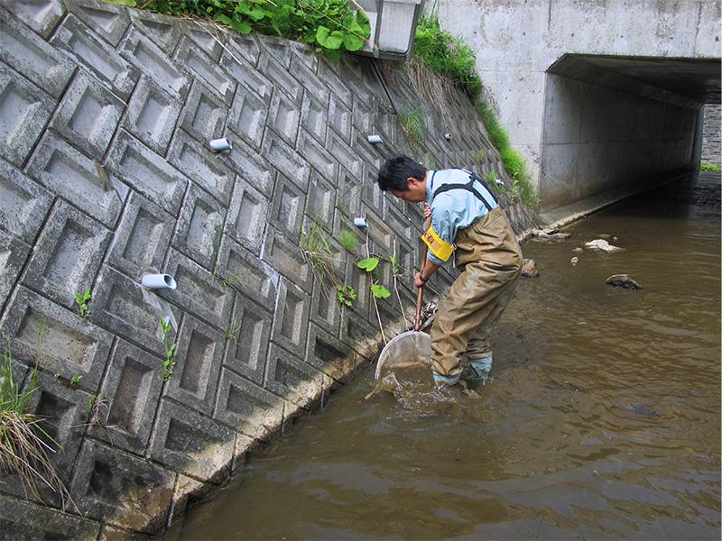 魚類調査風景